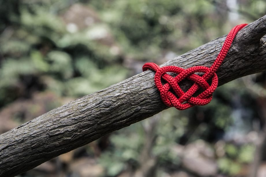 Knotted red rope tied to a tree branch